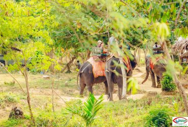 Half Day Samui Safari Tour