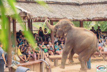 Half Day Samui Safari Tour 4